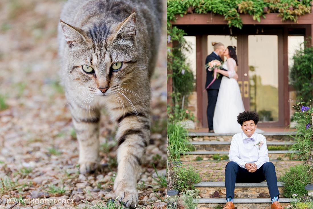 Wedding Photographer at Storybrook Farm Jonesborough TN-79